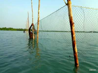 Fencing seagrass rehabilitation site